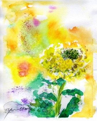 1002菜の花
