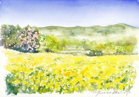 1303菜の花畑