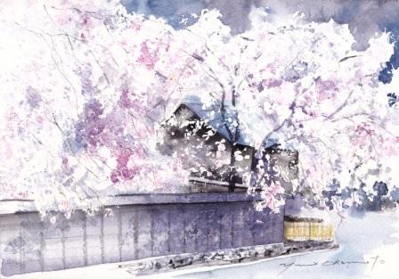 1303角館桜