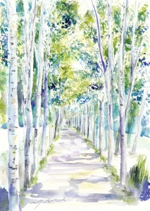 北海道白樺