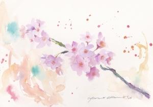 桜_0004 (640x447)