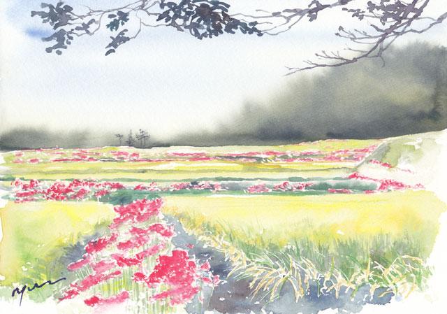 1710彼岸花と田園