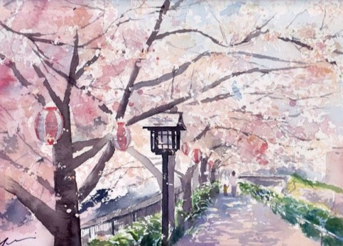 1803小浜桜