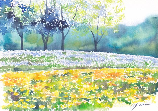 1805ポピーの咲く丘