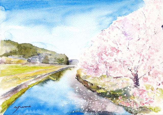1904丹波篠山桜