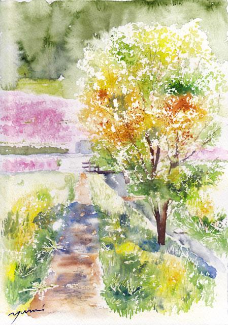 1904芝桜の里